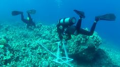 Diving deep, WSU researchers find wealth of fish