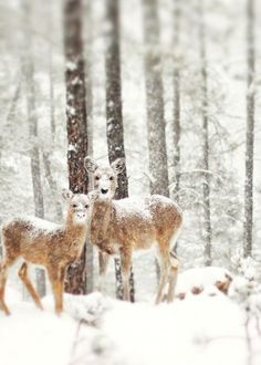 Awww....Mr. & Mrs. Winter Deer