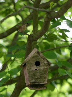 I enjoy the hardy song of little house wrens.