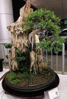 Bonsai tree with great development