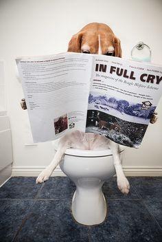 #Beagles #Pets #Funny