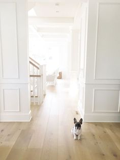 Oak Flooring. White oak flooring. Home interiors with White oak flooring and white paneled walls. Pravada Floors- Artistique Collection…