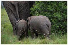 Extra Small and Extra Extra Large, Shamwari Game Reserve