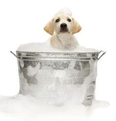 Make Your Own pH Balanced Dog Shampoo