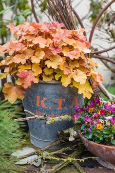 Heuchera 'Caramel' - I grow this variety, great for either partial sun/shade. Great color...