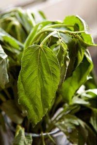 Bunt juteblader kjøpt i bangladeshisk matbutikk i Whitechapel i London Jute, Plant Leaves, London, Plants, Flora, Plant, London England, Utah, Burlap