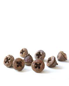 eucalyptus seed pods | STILL  (mary jo hoffman)