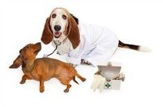 Vinegar Ear Rinse For Dogs
