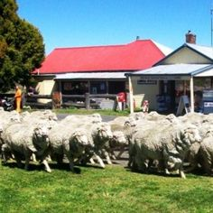 The property consists of approximately 5060m² and is in 5 Lots about ¼ acre each (total 1.25 acres). One Lot has the house and the business. The remaining 4 Lots are vacant... #KentuckyNSW #NSW #Store #BusinessForSale #BuyBusiness #SellBusiness Buy Business, General Store, Sydney Australia, Acre, Kentucky, Outdoor Decor, House, Mornings, Haus