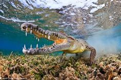 Photo Contest – 15 NHM Photographer Of The Year Pics