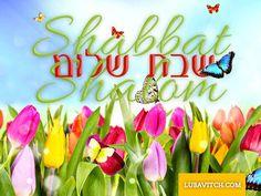 Chabad Lubavitch HQ (@Lubavitch)   Twitter Shabbat Shalom In Hebrew, 4th Commandment, Good Shabbos, Shavua Tov, Arte Judaica, Happy Sabbath, Birthday Blessings, Scripture Pictures, Jewish Art