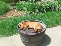 Sleeping in a pot -- hahaha!
