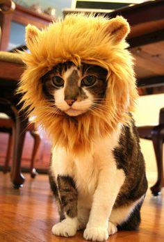 regalos originales gorro de león para gatos