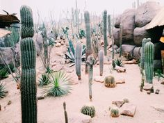 cactus, indie, and plants image Garden Cactus, Cactus Flower, Pink Garden, Cacti And Succulents, Cactus Plants, Plants Are Friends, Cactus Y Suculentas, Desert Rose, Desert Art