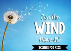 This is a science experiment about wind that we do during our weather unit. In this experiment, children blow on objects to simulate the wind. Place a variety of objects on the science shelf, some that can be moved by blowing them as well as some that cannot be moved. Children predict which objects they can move, …