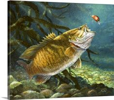Terry Doughty Solid-Faced Canvas Print Wall Art Print entitled Deep Water Prowler, None Wildlife Paintings, Wildlife Art, Cool Stuff, Wall Art Prints, Canvas Prints, Big Canvas, Framed Prints, Kayak Fishing, Fishing Tips