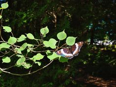 Little butterfly Insects, My Photos, Butterfly, Animals, Animales, Animaux, Bowties, Butterflies, Animal
