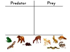 Worksheets Predator Prey Worksheet predator prey worksheet pixelpaperskin vintagegrn