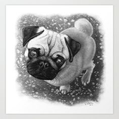Pug in Pencil Art Print by Ben Krefta - $15.00  #print #artwork #pug #drawing #pencil #dog