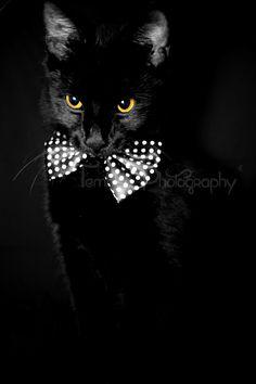 Castiel, my beautiful yellow-eyed boy!