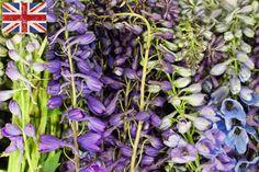 British Blue/ Purple delphiniums at New Covent Garden Flower Market - July 2015