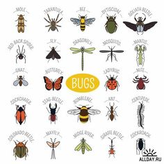 Insects icon flat style