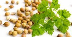 7 tolle Gesundheitsvorteile von Gurken – Gesund Leben Almond, Curry, Food, Homemade Cosmetics, Cilantro, Benefits Of, Liquor, Amazing, Health