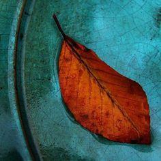 Dry leaf on water