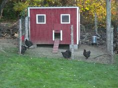 Chicken House - Chicken Coop Designs and Construction - coop photos Chicken Images, Chicken Coop Designs, Quails, Keeping Chickens, Building A Chicken Coop, Chicken Houses, Coops, Construction, Photos