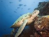 Diving and Snorkeling in Barbados