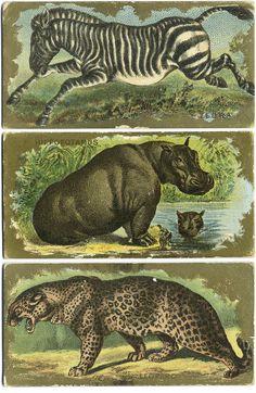 → Kinney Bro's cigarette cards 1880s