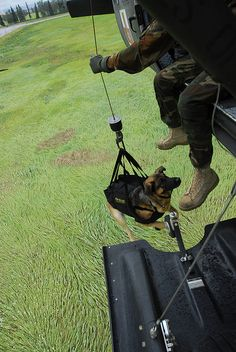 Cezar, a military working dog assigned to the 28th Military Police Detachment at Fort Wainwright, Alaska, rides up to a medical evacuation helicopter on the aircraft's hoist. (U.S. Army photo by Staff Sgt. Matthew T MacRoberts)