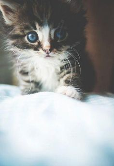 I want a kitty like this or a black one.