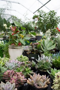 So many beautiful colours in the greenhouse right now! #succulents #Chatham #Glasshouse - Visit http://www.glasshousenursery.ca