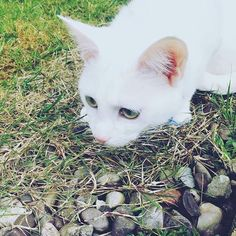#cats #cute