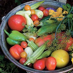 Heirloom Vegetables - sources on where to get them!