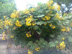 alaorilladelrioBetis: A traves de mi camara 4 flores en invierno 1