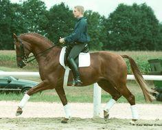 Farinelli *1994 TRAK Tolstoi x Freundin IV v. Amadeus - Germane