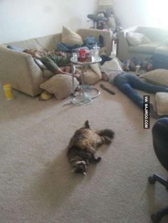 A compilation of Funny Pictures of Drunk People. These people drunk too much and situation went out of their hands. These Funny Pictures of Drunk People are Drunk Cat, Drunk Humor, Drunk Fails, Really Funny Pictures, Cute Animal Pictures, Pet Pictures, Funny Cute, Hilarious, Funny Shit
