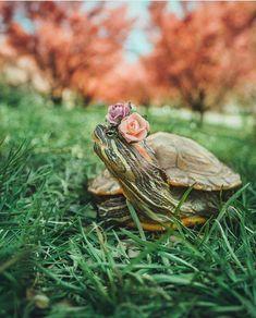 Red Ear Turtle, Pet Turtle, Tortoise Turtle, Tiny Turtle, Happy Turtle, Turtle Love, Cute Little Animals, Baby Animals, Adorable Animals