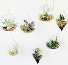 air plants and succulents in hanging vases