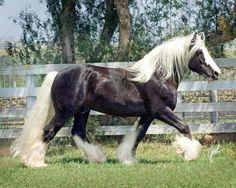 st clarins gypsy stallion - Avast Yahoo Search Results