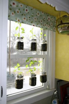 Start seeds in hanging mason jars?