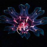 Impressive Jellyfish Photography