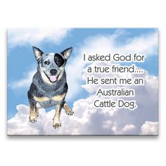 dog S nantlle Aussie Cattle Dog, Austrailian Cattle Dog, Cattle Dogs, Aussie Dogs, Dog Rules, Happy Dogs, Dog Mom, Dog Lovers, Cute Animals