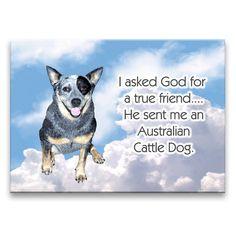 dog S nantlle Aussie Cattle Dog, Australian Cattle Dog, Cattle Dogs, Dog Rules, Happy Dogs, Dog Care, Dog Mom, Dog Lovers, Cute Animals
