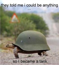 #animals #funny #turtle #lol #meme They told me I could be anything...