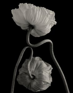 Photography Institute, History Of Photography, Still Life Photography, Fine Art Photography, Contemporary Photography, Black And White Photography, Photo Art, Poppies, Artist