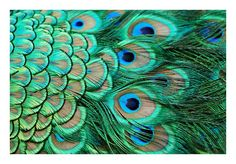 You can't get a much more fitting theme than this! How might you incorporate this theme, without an extravagance of actual peacock feathers? Why, with mosses in fluorescent shades of green!
