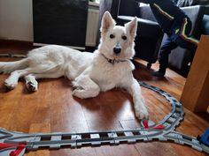 Zaterdagen zijn mijn favoriete werkdagen, niet alleen omdat het voor mij de vrijdag is, maar omdat het voelt als een extra weekenddag! Ik vulde hem na het werk in met boodschappen bij de Kruidvat, de administratie op orde brengen en spelen met de Duplo trein! Lees je mee? Zaterdag 10… Het bericht &Zus dagboek #6 aan de slag met de Duplo verscheen eerst op Bij Zus. Dogs, Animals, Blogging, Animales, Animaux, Pet Dogs, Doggies, Animal, Animais